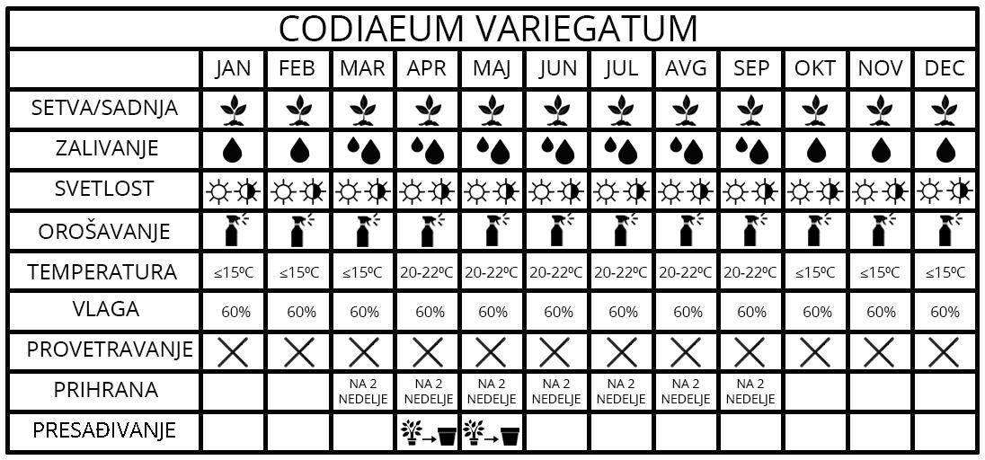 Codiaeum variegatum 1