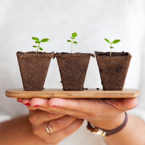 kako da rasklijavate seme u vašem domu - dendrolog