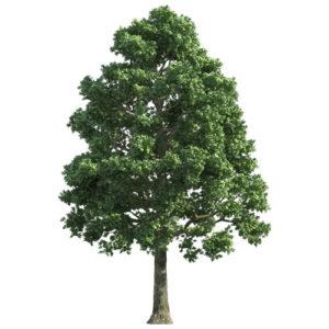 Dendrolog drvece