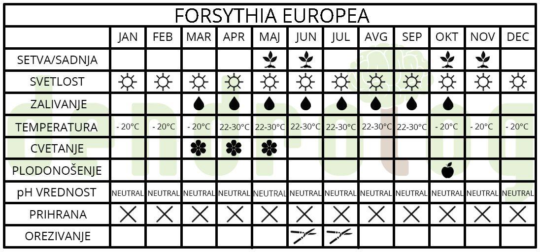 Fosythia europea