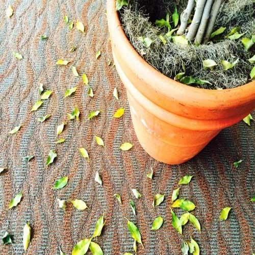 Zašto listovi opadaju? Dendrolog