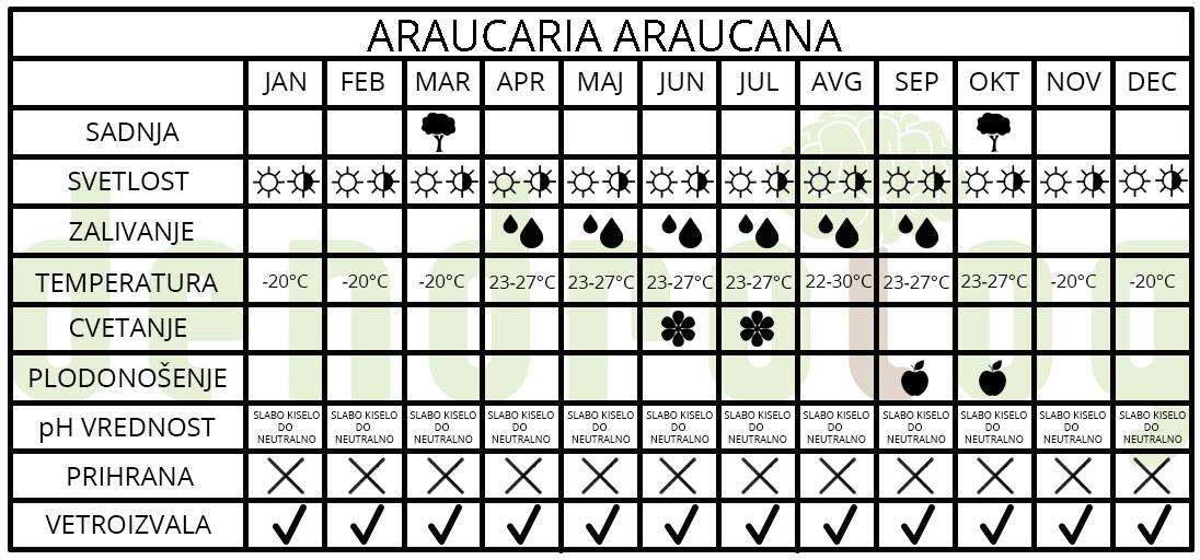 Araucaria araucana tabela