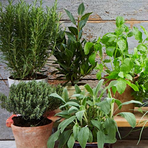 Kako biljke utiču na raspoloženje dendrolog