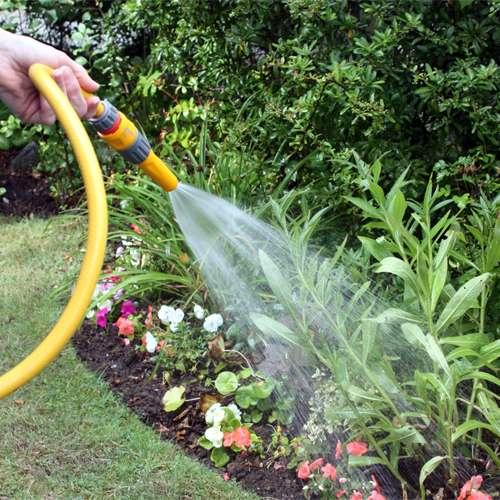 Kako-zalivati-biljke-tokom-leta-dendrolog