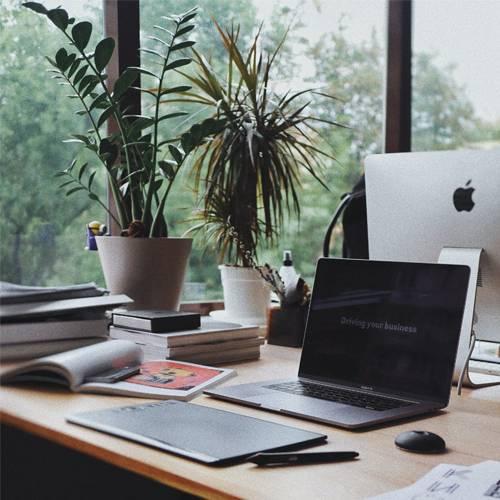 5-najboljih-biljaka-za-radni-prostor-dendrolog