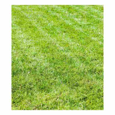 Smeša trava za sunce 500g Dendrolog