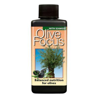 Olive Focus 100ml Dendrolog