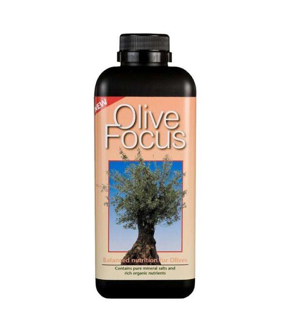 Olive Focus 1L Dendrolog