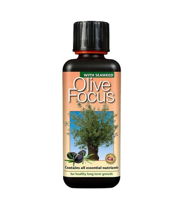 Olive Focus 300ml Dendrolog