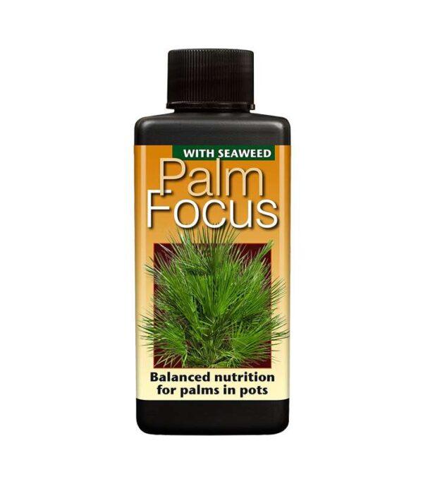Palm Focus 100ml Dendrolog