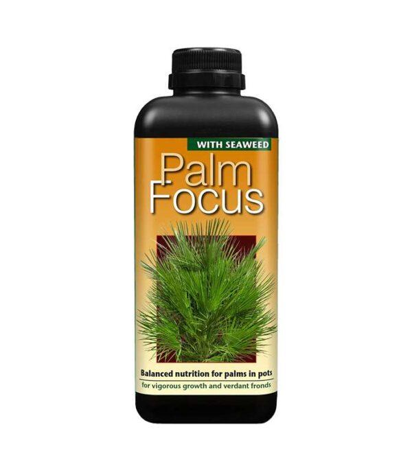 Palm Focus 1L Dendrolog