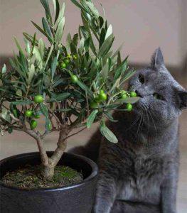 Sobne biljke otrovne za mačke 3 Dendrolog