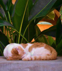Sobne biljke otrovne za mačke 4 Dendrolog