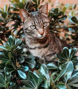 Sobne biljke otrovne za mačke Dendrolog