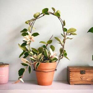 5-nacina-za-podupiranje-sobnih-biljaka-3-Dendrolog