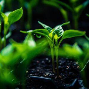 PH vrednost zemljišta biljaka