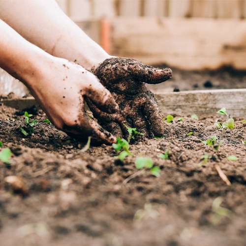 Sta ph vrednost zemljista znaci biljkama Dendrolog Doktori za vase biljke Sandie Clarke